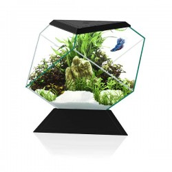 Ciano Nexus Betta 5C - Black