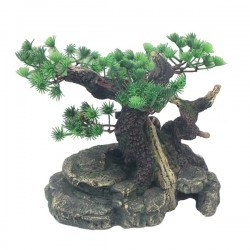 Large Bonsai with Plant